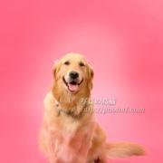 ペット撮影 平野ミキちゃん2 笑っていますよ