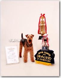 ペット写真 日本一チャンピオンの警察犬アレック君