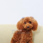 ペットの写真は江戸川区写真館でどうぞ