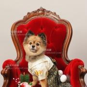 お正月の晴れ姿 犬種ポメラニアン