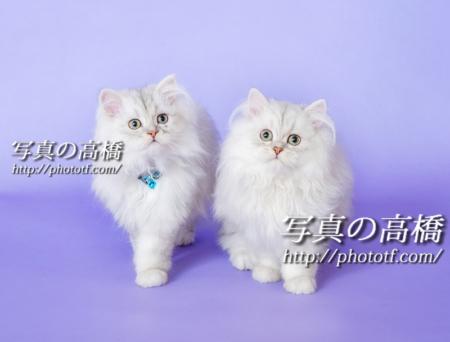 ペット写真は東京写真スタジオペットオーディション用もどうぞ。